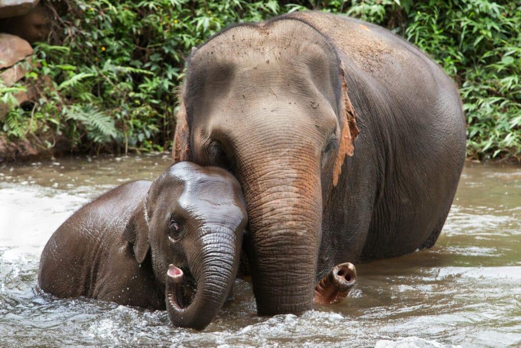 elefant wappentier