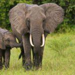 alternaMedica-fachschule-duesseldorf-wappentier-elefant